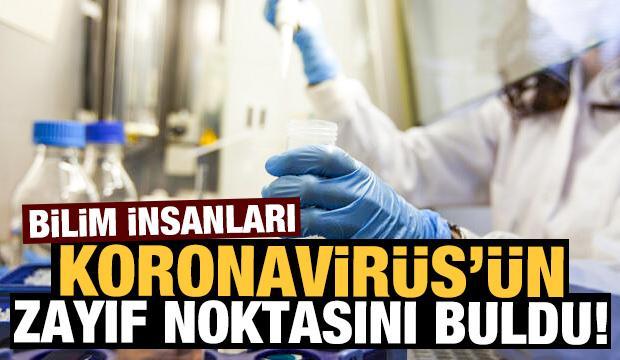 Bilim insanları corona virüsün zayıf noktasını buldu