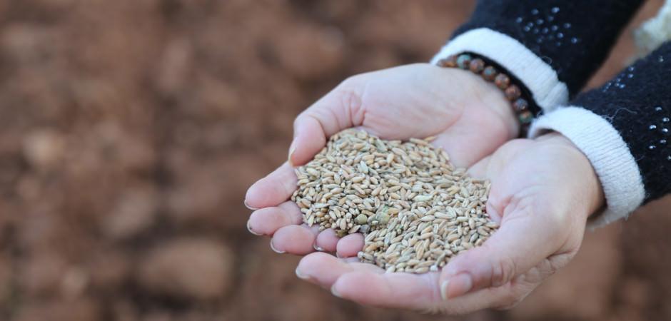107 bin çeşit tohum gen bankasında saklanıyor