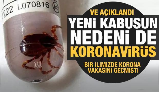 Kırım Kongo Kanamalı Ateşi vakalarının sebebi koronavirüs!
