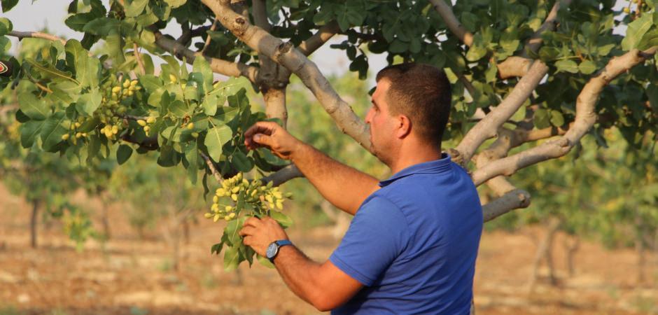 Devlet desteği alan çiftçi köydeki göçü durdurdu