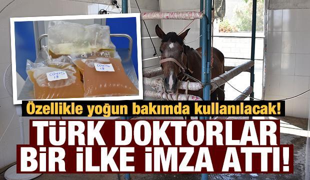 Türk doktorlar Kovid-19 tedavisinde bir ilki başardı! Atlardan elde ediliyor...