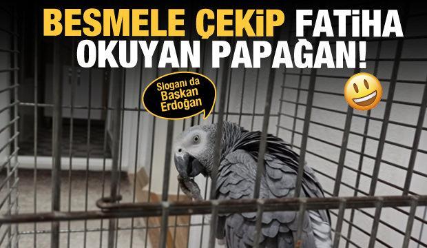 Besmele çeken Fatiha okuyan papağan! Sloganıda Başkan Erdoğan