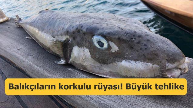 Balıkçıların korkulu rüyası! Tehlike 'büyümeye' devam ediyor