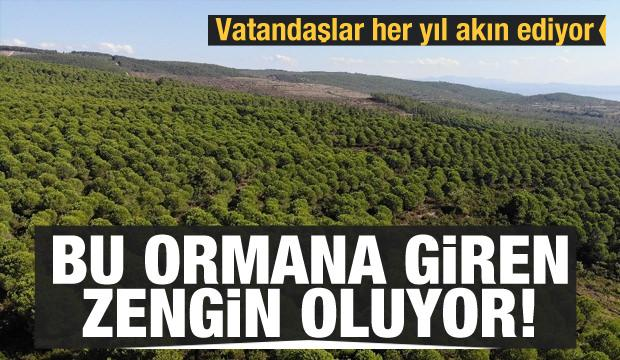 Bu ormana giren zengin oluyor
