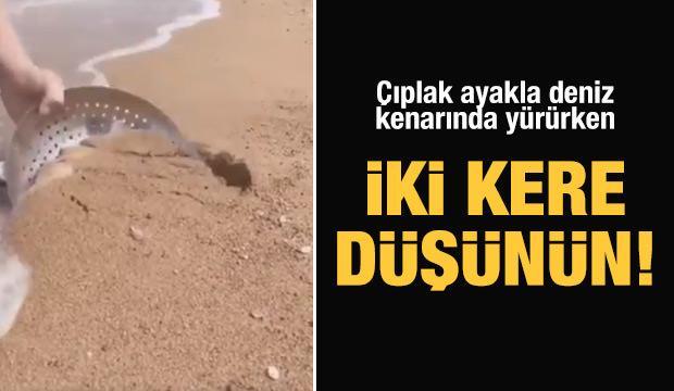 Çıplak ayakla deniz kenarında yürürken iki kere düşünün! (20 Ekim Bi Acayip Haberler)