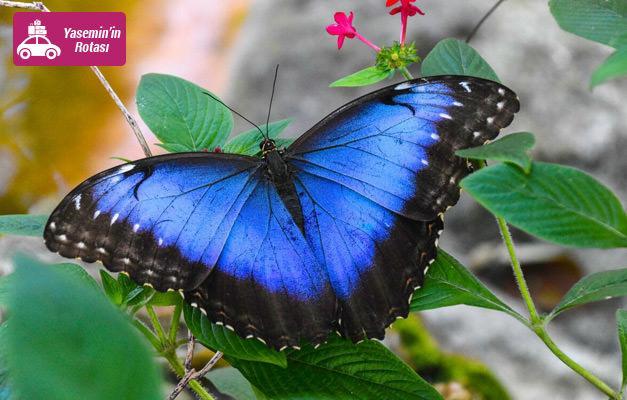 Türkiye'nin ilk kelebek çiftliği: Beykoz Kelebek Çiftliği