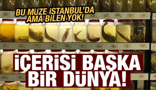 İstanbul'un gizli kalmış 'balık müzesi'