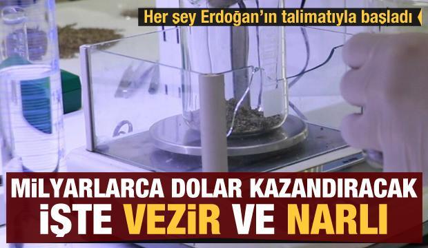 Erdoğan talimat vermişti! Milyarlarca dolar kazandıracak: İşte ilk yerli kenevirler