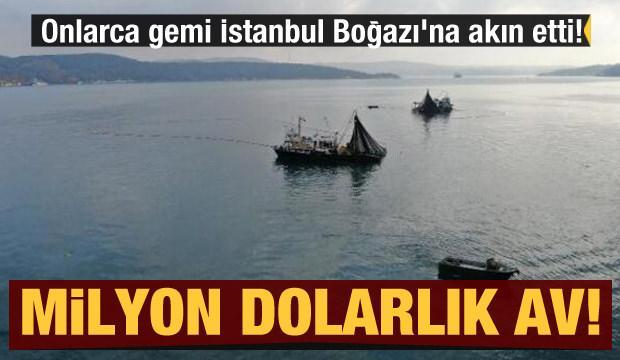 Onlarca gemi İstanbul Boğazı'na akın etti! Milyon dolarlık av