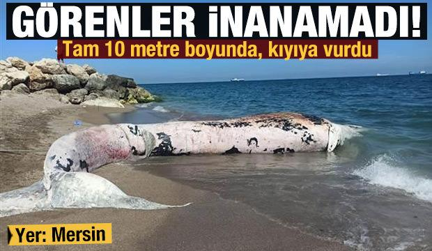 Görenler inanamadı! Mersin'de 10 metre boyunda oluklu balina kıyıya vurdu