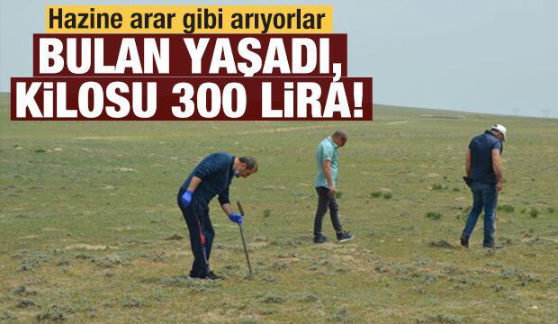 Hazine arar gibi arıyorlar: Bulan yaşadı kilosu 300 lira