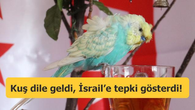 Kuş dile geldi, İsrail'e tepki gösterdi!