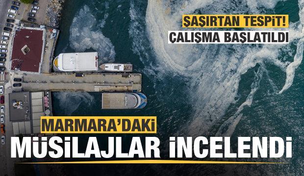 Marmara'daki müsilajlar incelendi! Şaşırtan tespit!
