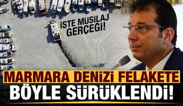 Marmara Denizi felakete böyle sürüklendi! İşte müsilaj gerçeği