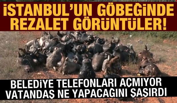 İstanbul'da rezalet görüntü: Halk şikayetçi, belediye sessiz!