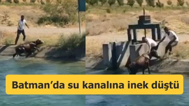 Batman'da su kanalına inek düştü