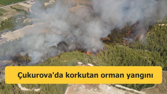 Çukurova'da korkutan orman yangını