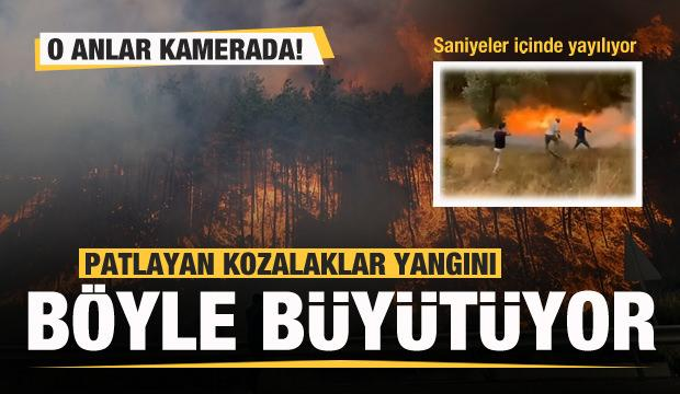 Patlayan kozalaklar yangını böyle büyütüyor! Saniyeler içinde...