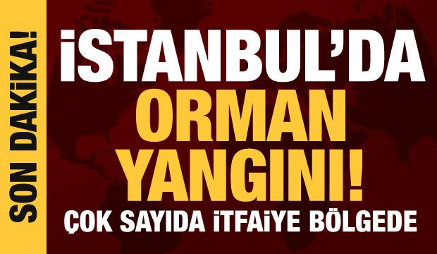 Son dakika haberi: İstanbul'da orman yangını!