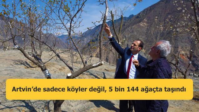 Artvin'de sadece köyler değil, 5 bin 144 ağaçta taşındı
