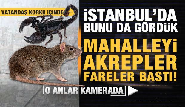 İstanbul'da buda oldu! Mahalleyi akrepler ve fareler bastı