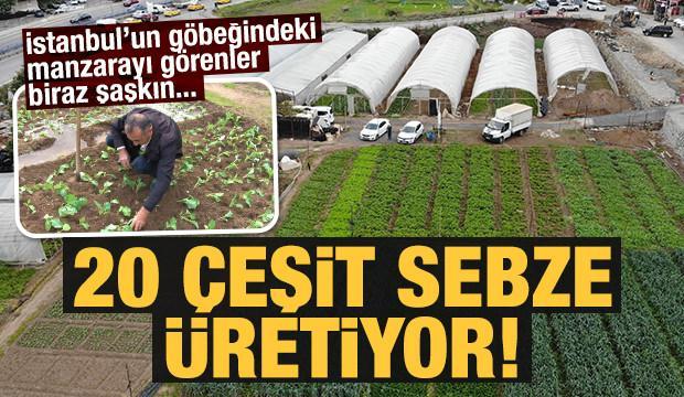 İstanbul'un göbeğinde, E-5'in yanında organik tarım