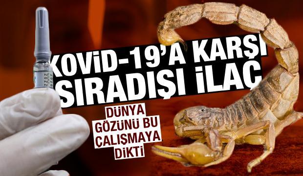 Kovid-19'a karşı sıradışı ilaç! Dünya gözünü bu çalışmaya dikti