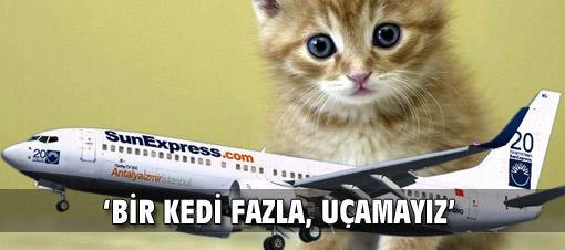 Kaptan pilot: Bir kedi fazla, uçamayız