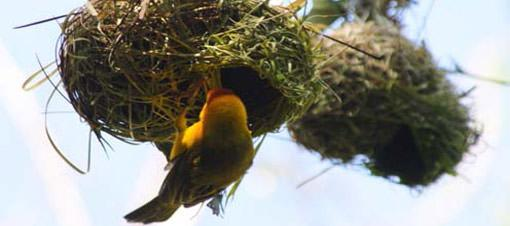 Mimar kuşların sanat harikaları GALERİ